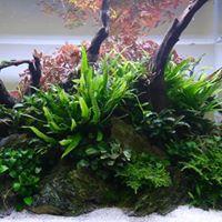 aquariophile frederic-gosselin