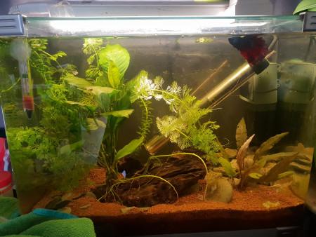 aquariophile flamant-rose