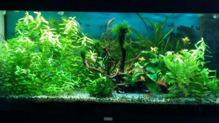 aquariophile perouet
