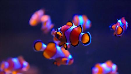 aquariophile BlueMarine31