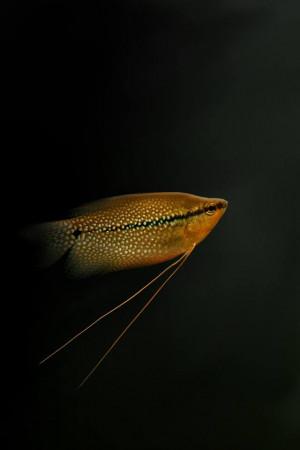 aquariophile ppal31