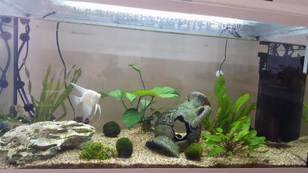 aquariophile Melcki