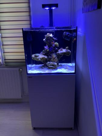 aquariophile Dreico