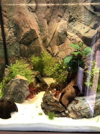 aquariophile eric83260
