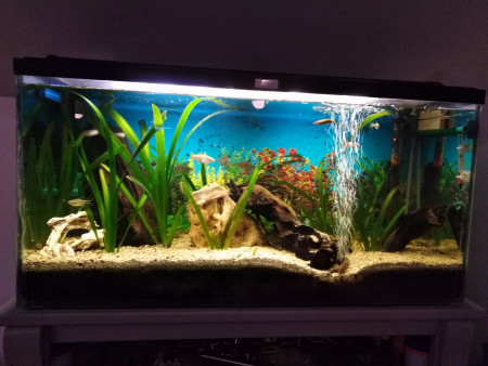 aquariophile olivier-perrin