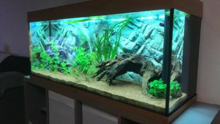 aquariophile valentin-pasqualini