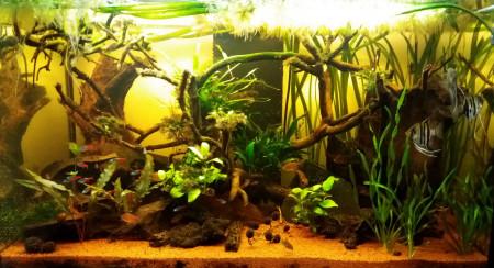 aquariophile LG92