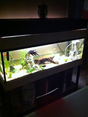 aquariophile Imdoctor