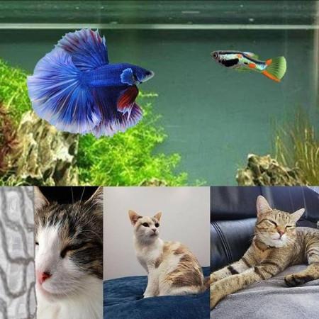 aquariophile Aqualoulou