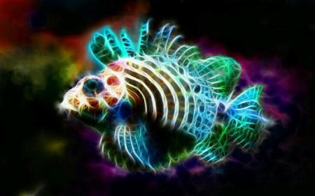 aquariophile Willb