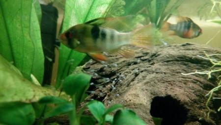aquariophile Momo14