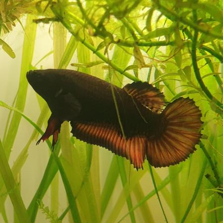 aquariophile Kyllian