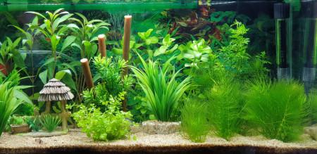 aquariophile Gaby86