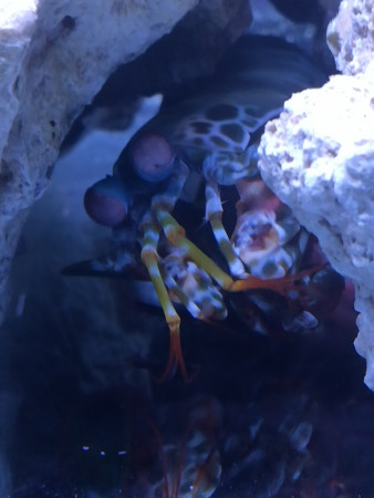 aquariophile valerie-lepretre