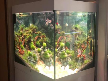 aquariophile Aqua-Romana