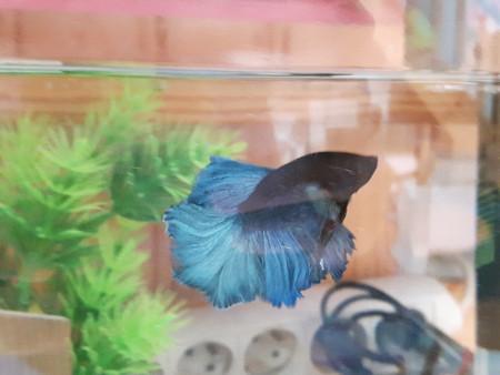 aquariophile Lulu82