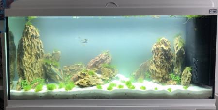 aquariophile sophie-lulli
