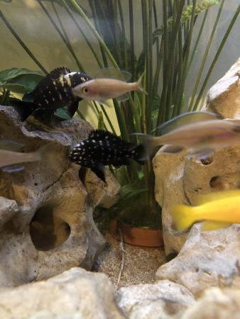 aquariophile xav.man1