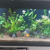 aquariophile nathalie64