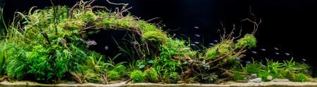 aquariophile sapmath