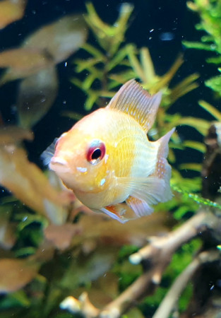 aquariophile Dede075