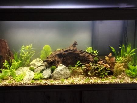 aquariophile jajabinn