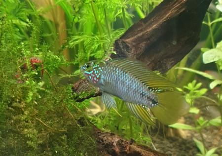 aquariophile Leeloo20oo