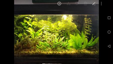 aquariophile Stef7524