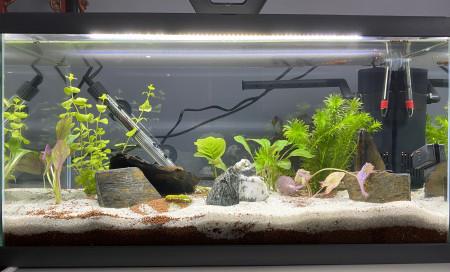 aquariophile Newbie