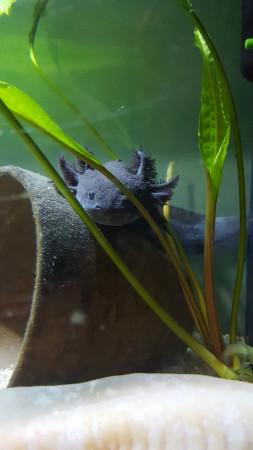 aquariophile Martin