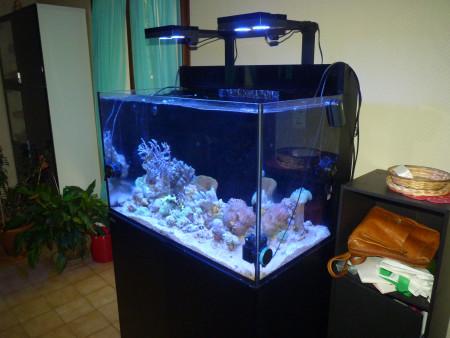 aquariophile wierbinski