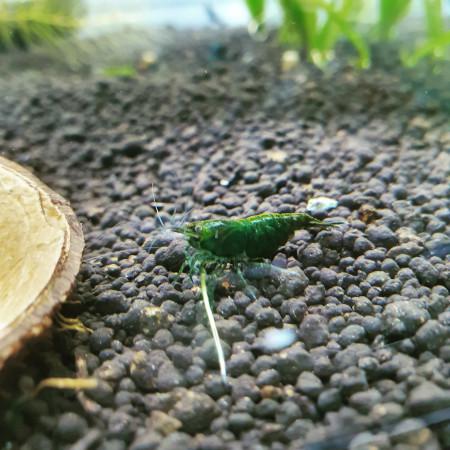 aquariophile Naturescape