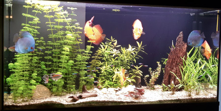 aquariophile Erich