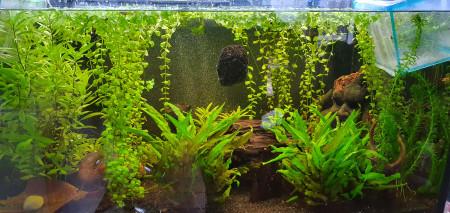 aquariophile Kiki009