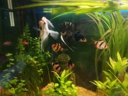 aquariophile danielle-queval