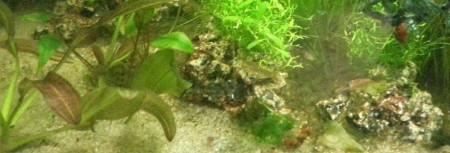 aquariophile Masson