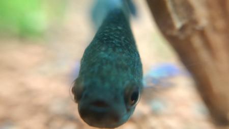 aquariophile Nainnouch