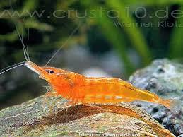 aquariophile duarte