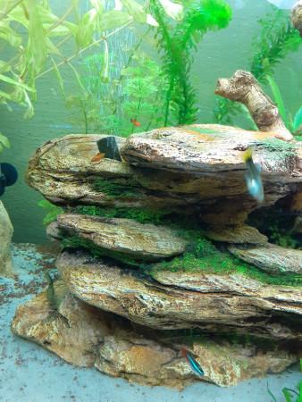aquariophile pika78