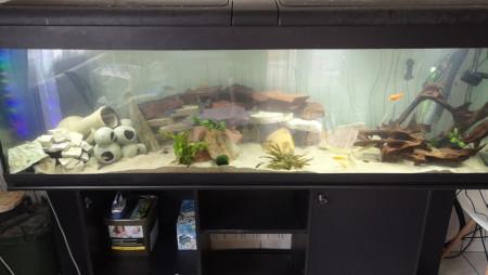 aquariophile Loic62