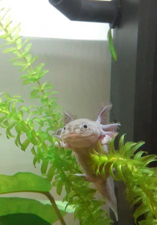 aquariophile CeceGigi