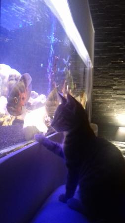 aquariophile Nael
