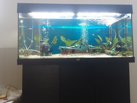 aquariophile Adri94