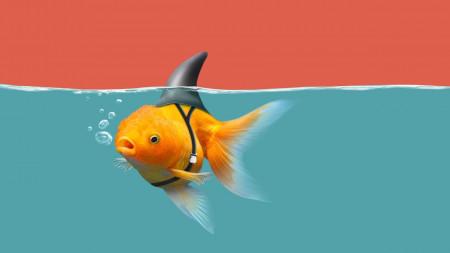 aquariophile Issanissa