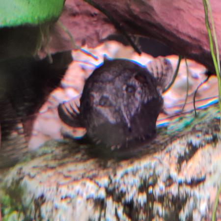 aquariophile syd38