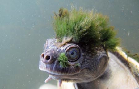 aquariophile TortueGeniale91