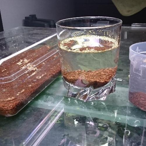 iwagumi dry start semer