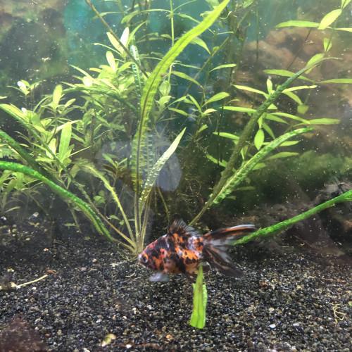 Acheter Aquarium 250l A Vendre