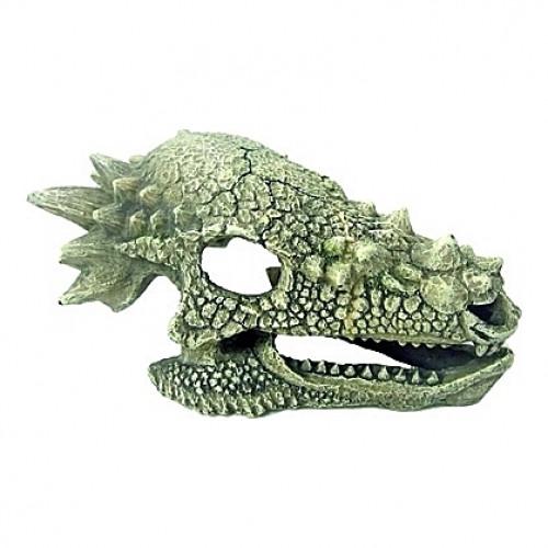 Squelette tête de dragon - 15,3x10x8cm