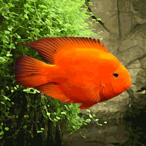 Perroquet rouge xxxl (environ 16 cm)